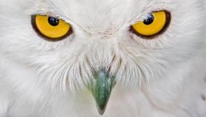 OwlEyes